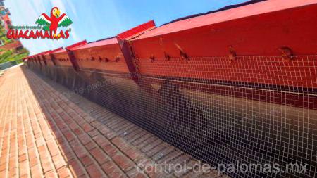 malla control de palomas restringe el acceso de estas aves a tus edificios