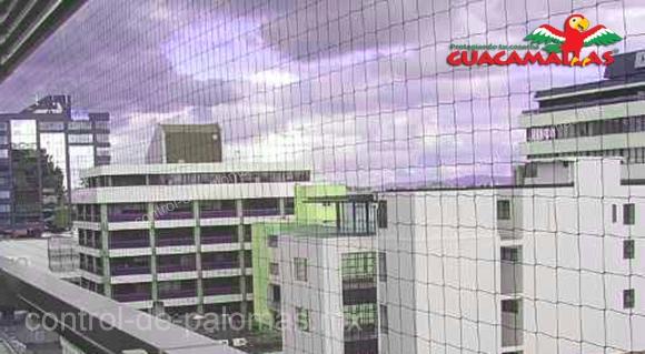 GUACAMALLAS control de palomas instalada en edificios altos