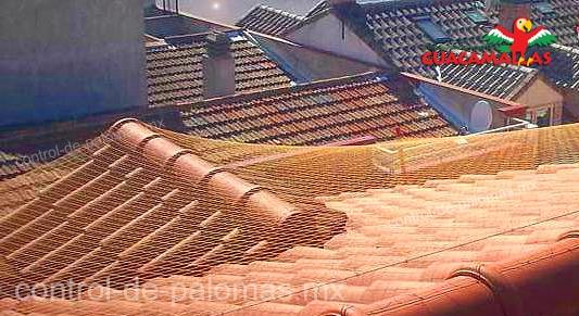 GUACAMALLAS Control de palomas en techos