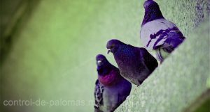 control de aves en cultivo