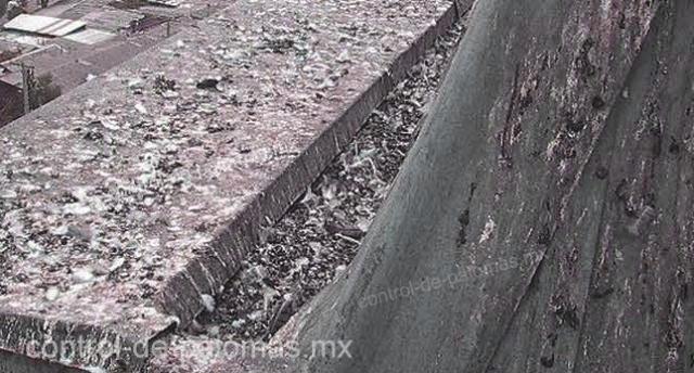 Las palomas son una plaga propagadora de enfermedades además de sucias