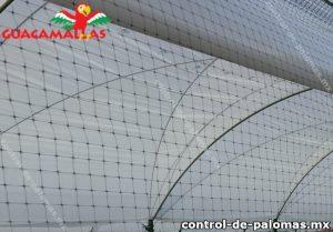 Malla anti palomas instalada en campo de cultivos