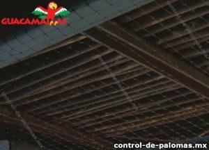 Estructura metálica y malla anti palomas